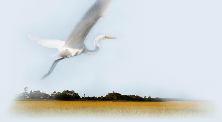 Soaring Bird on Kiawah Island