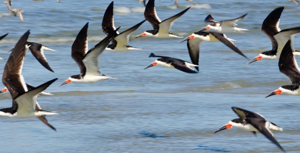 Birds flying over Kiawah
