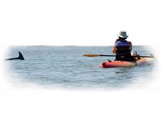 Kayak and Dolphin