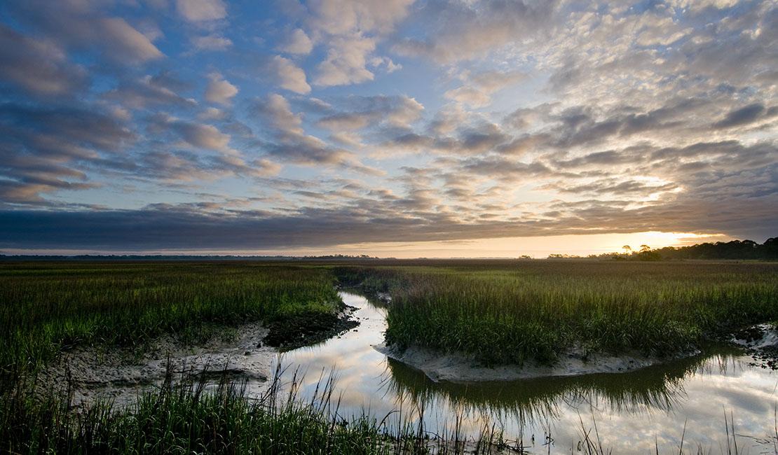 Neighborhood Spotlight: The Estuary