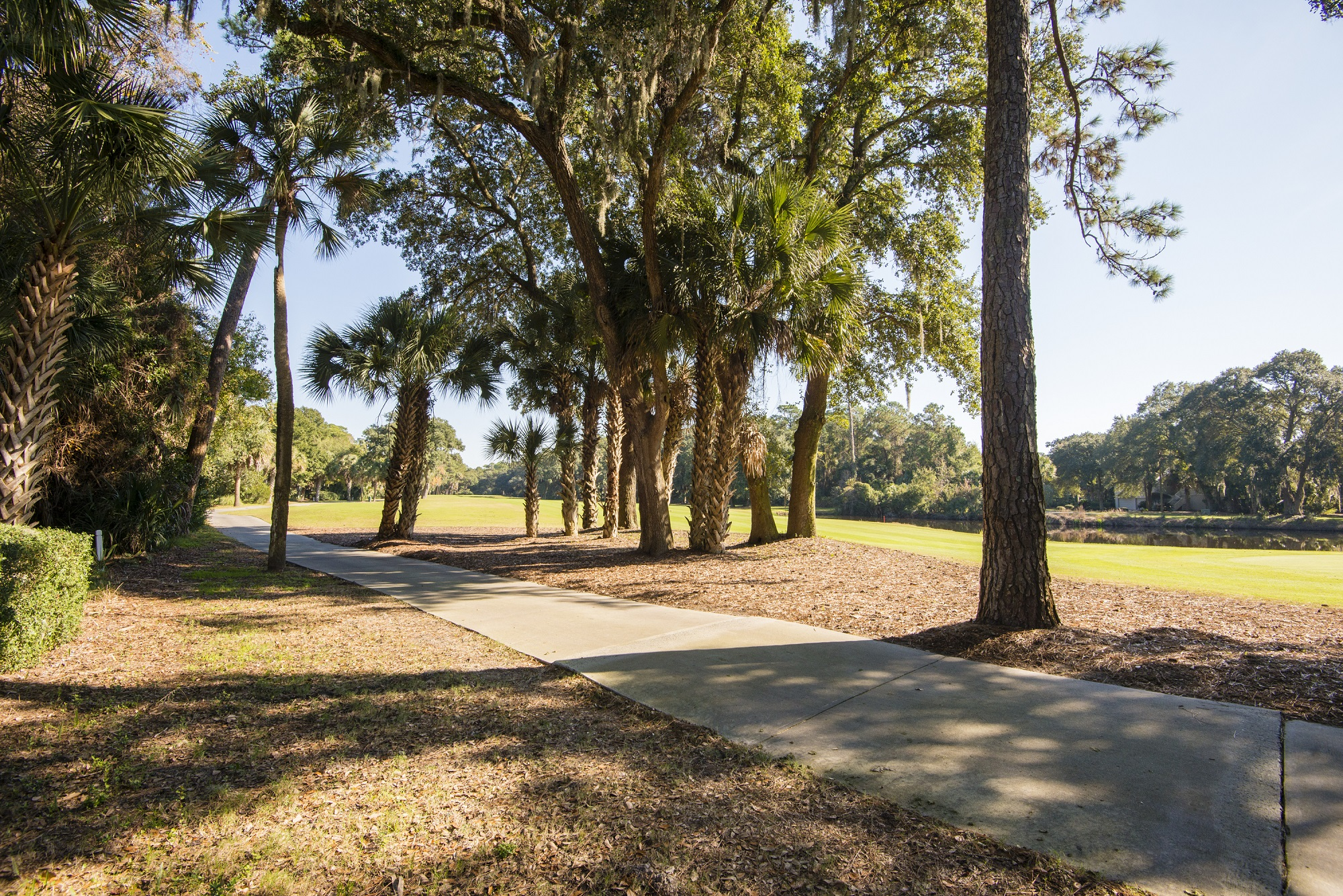 Plantation Woods South in Photos 4